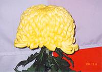 Crisântemo (flor da aldeia)